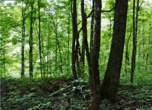 foreste-fsc